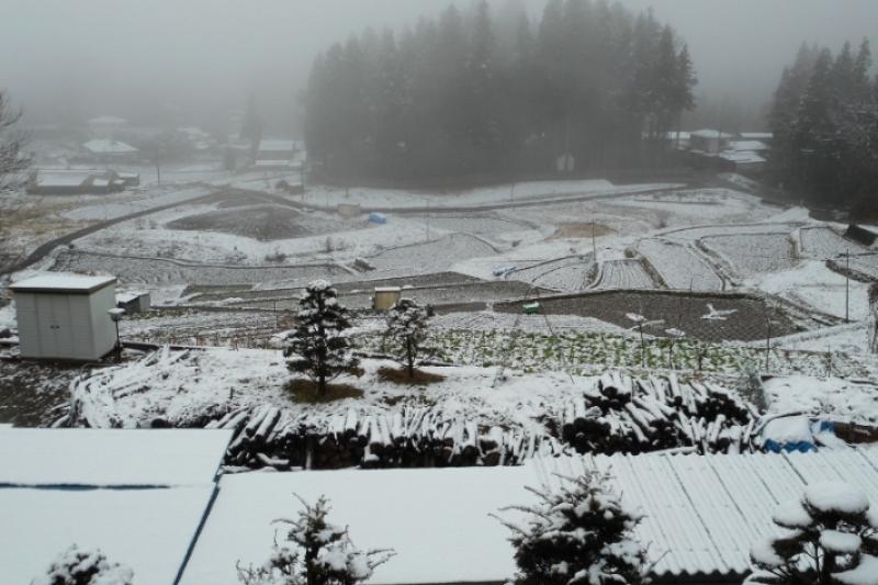 守田神社の森と田園風景