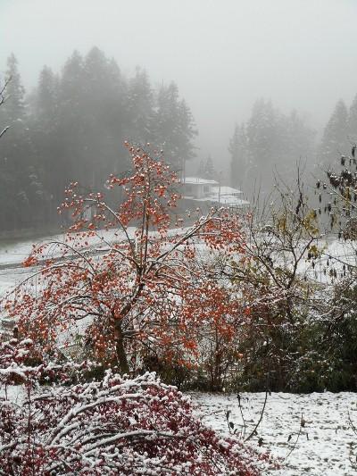かきと赤い実に雪