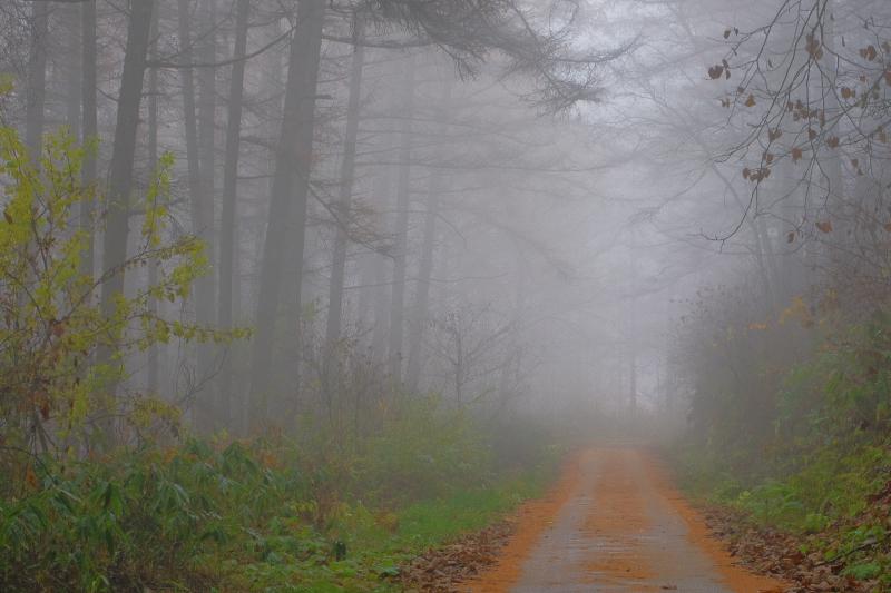 霧にかすむ冬道
