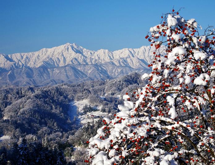 冬将軍を迎えた「奥穂高岳」と「たわわの実」
