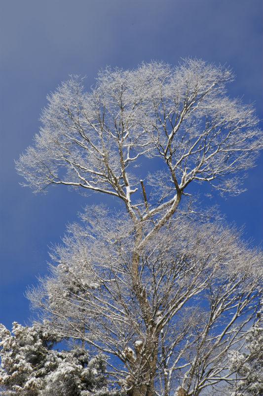 冬の華(1)
