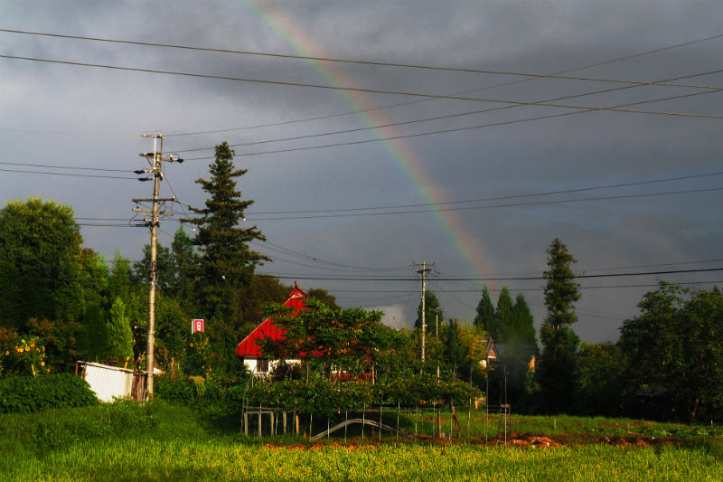夕立の後の虹(1)