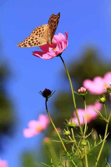 秋の蝶 その2(2/2)