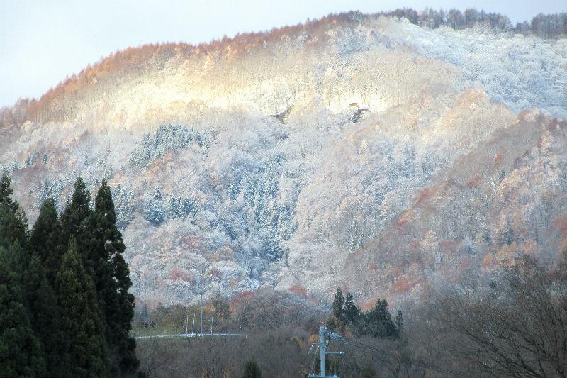 金色に輝く陣場平山の霧氷