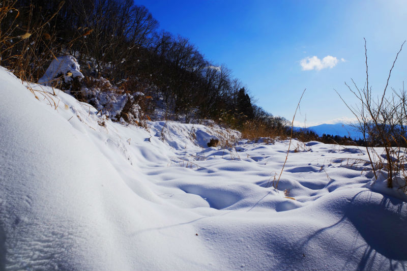 休耕田に積もる雪