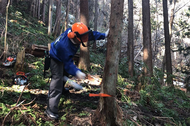 ぽかぽか陽気な昨日、10名で森林整備