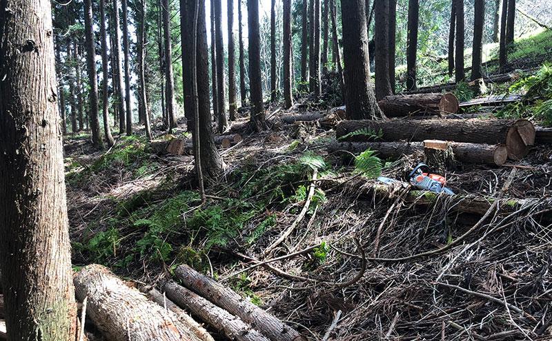 今週の森林整備活動!天候にも恵まれた1週間