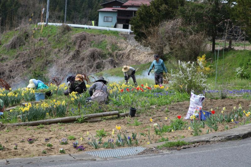 スイセン・チューリップ・ムスカリ・ビオラ等が咲く定谷口花壇(3/3)