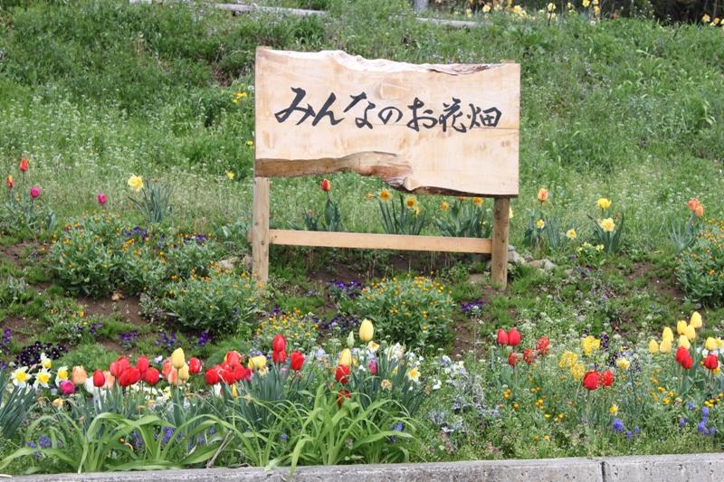 「みんなのお花畑」の整備をお手伝いできる方を募集しています!!