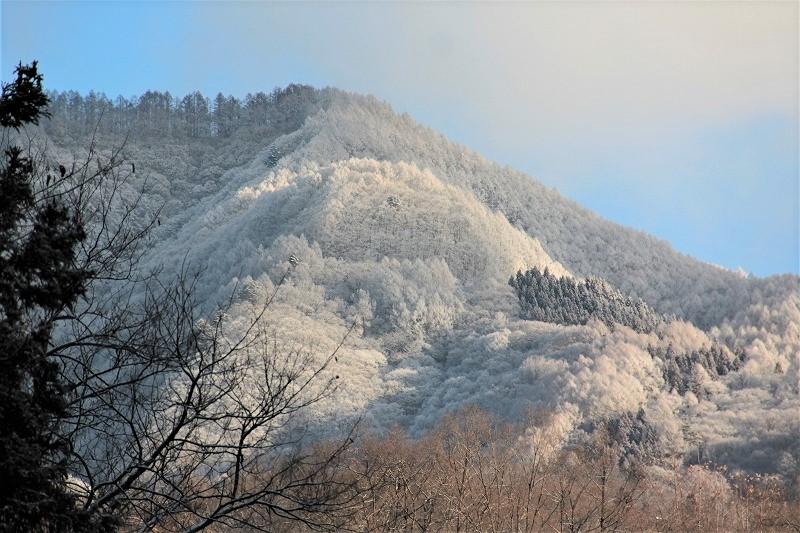 霧氷の朝(陣場平山)