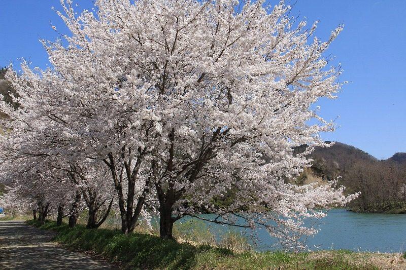 春の訪れ⑤